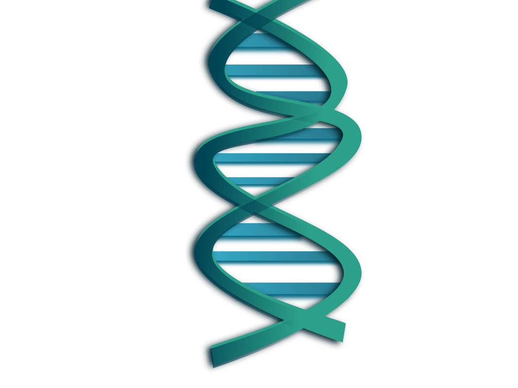 Dna clipart simple. Medium image png