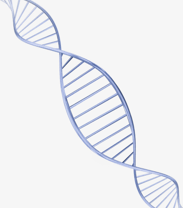 Download free png blue. Dna clipart simple
