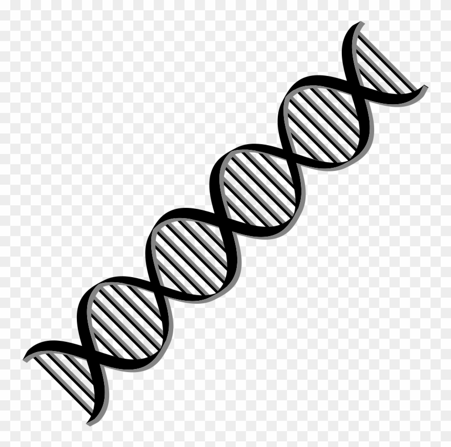 Transparent black and white. Dna clipart svg