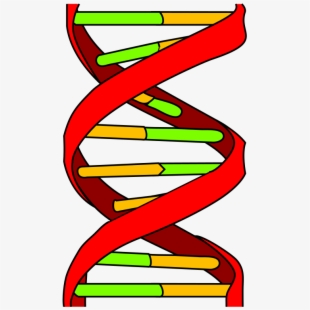 Atom png icon free. Dna clipart wikipedia