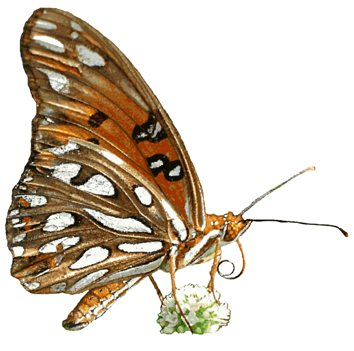 Do png files have transparent background. Image free nature images