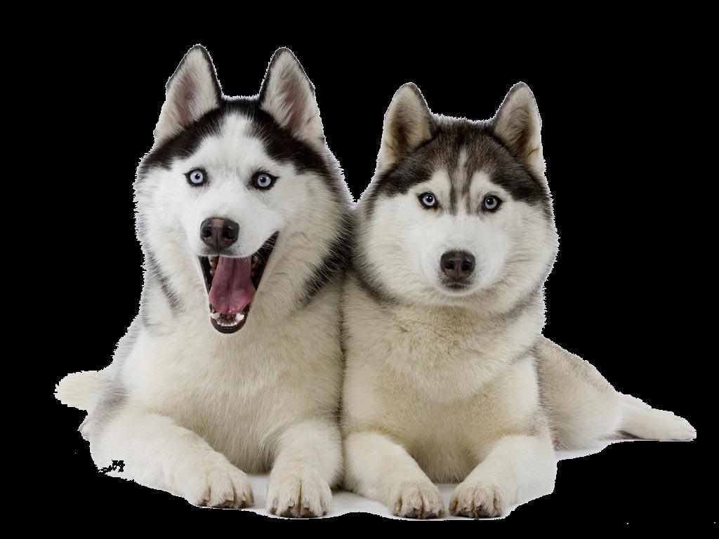 Png peoplepng com. Husky clipart dog indian