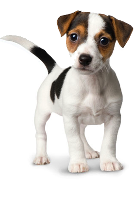 Dog vector png. Free icons and backgrounds