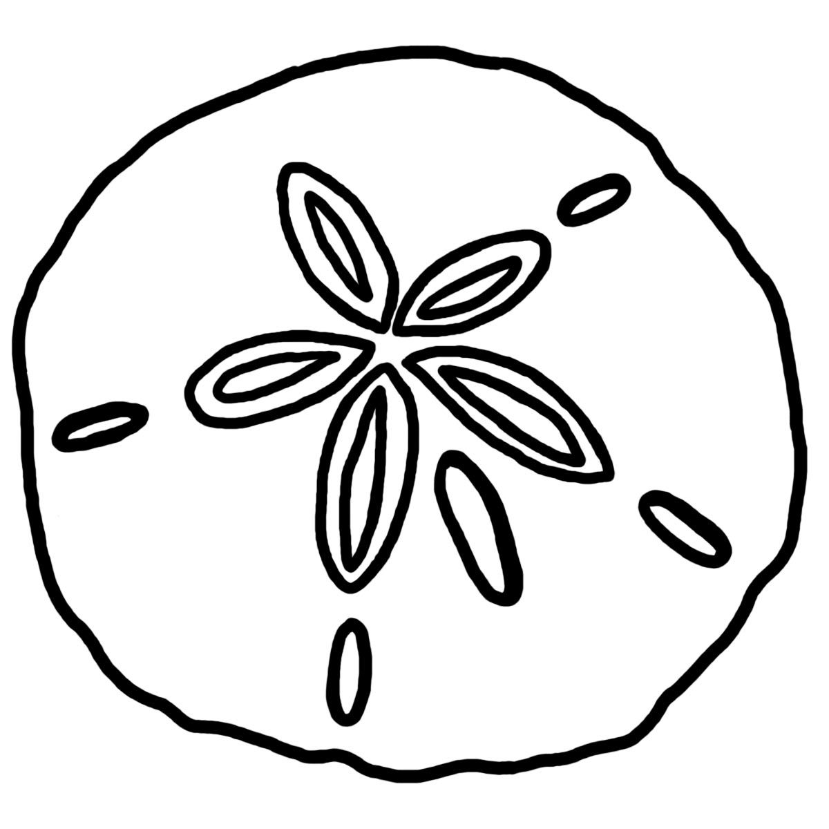 Shell clipart sand dollar. Beach drawings art custom