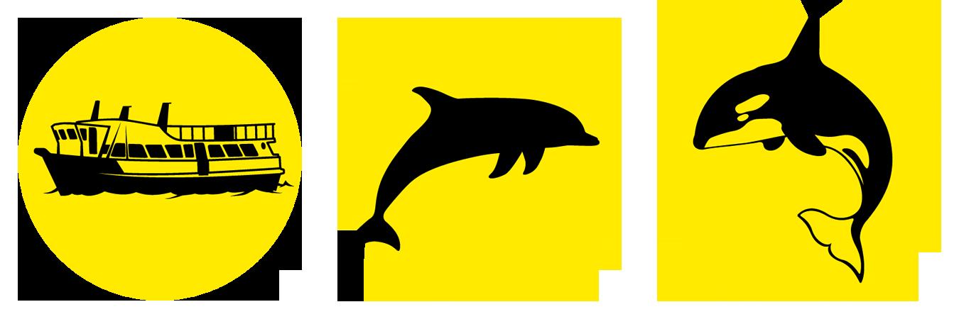 Bay explorer island wildlife. Dolphin clipart animal sea nz