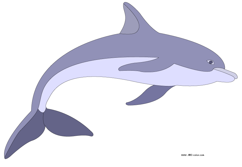 color dolphin clipart