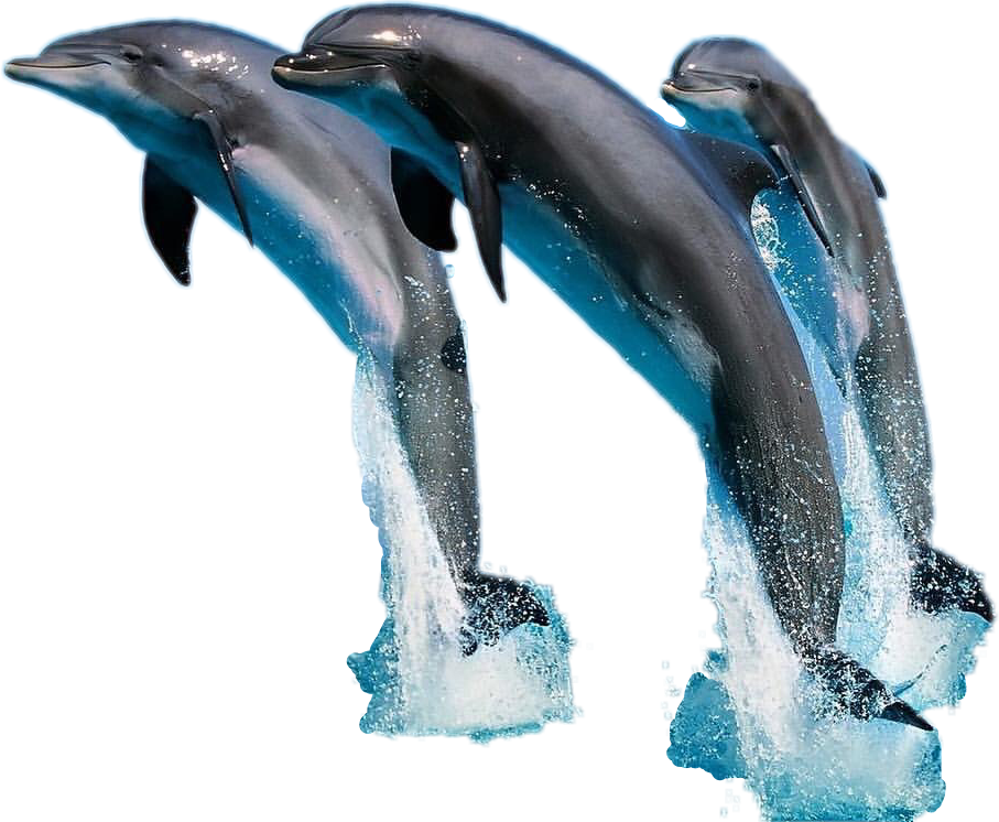 Sea jump freetoedit sticker. Dolphin clipart dolphin splash