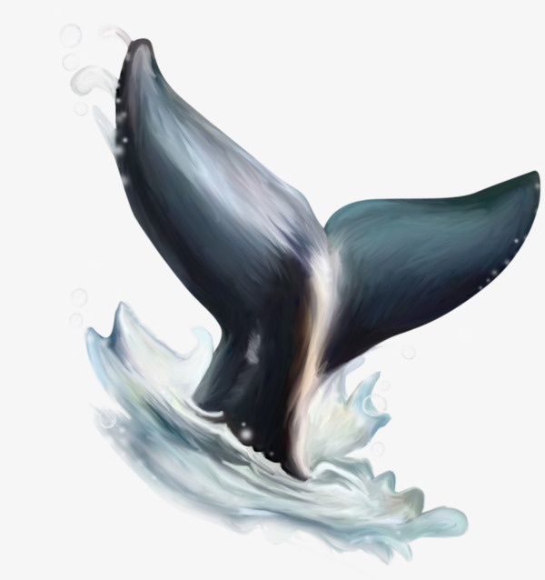 Tail png free transparent. Dolphin clipart dolphin tale