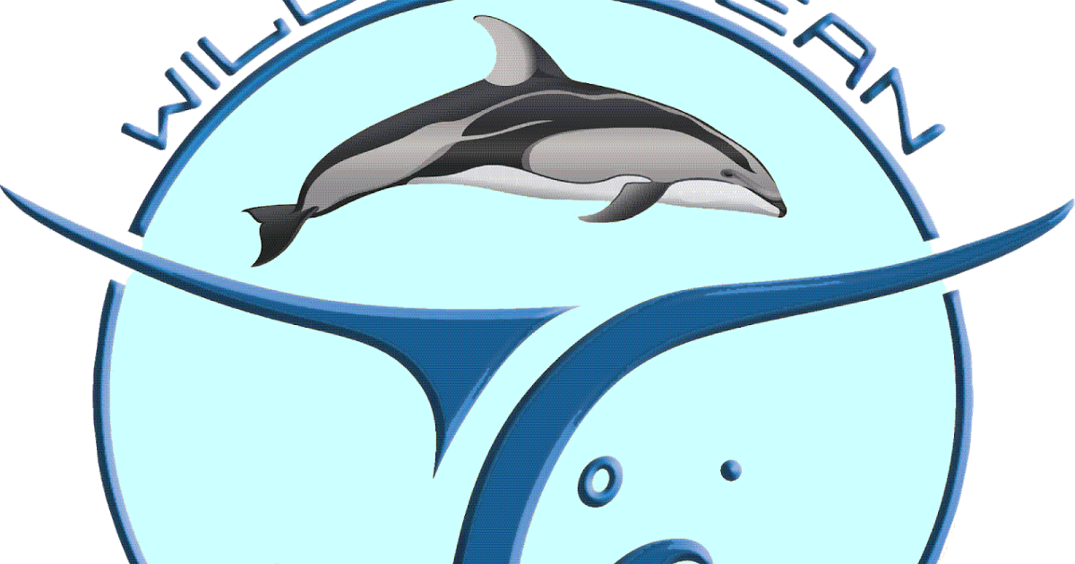 Whales and Dolphins BC Sightings