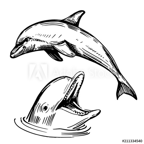 Sketch of illustration converted. Dolphin clipart hand drawn