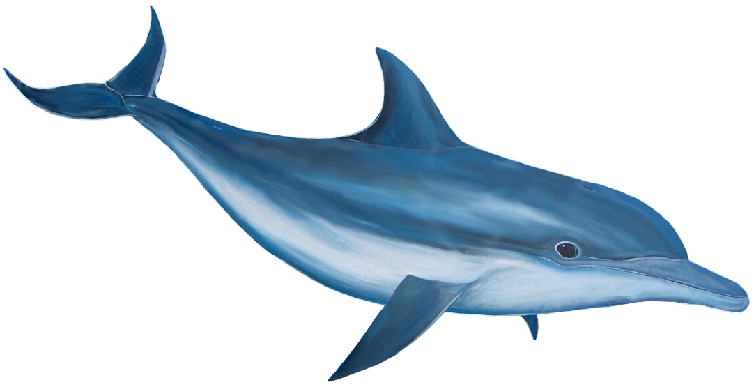 Bottlenose blue thing pencil. Dolphin clipart kid