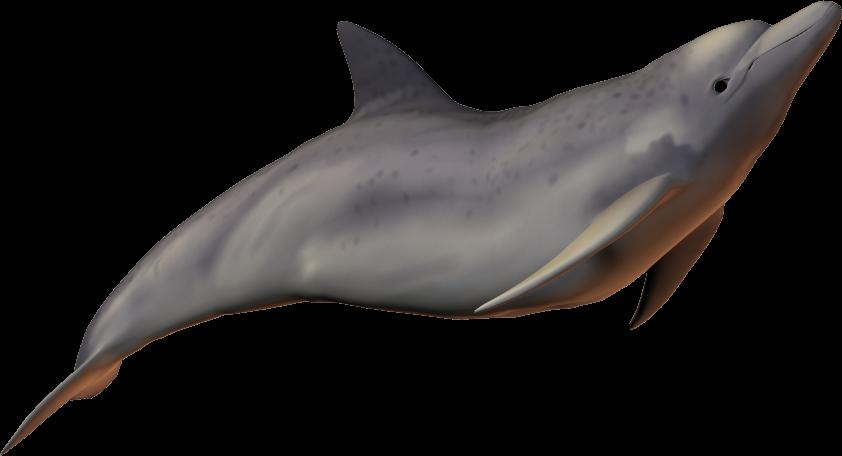 Dolphins clipart baiji