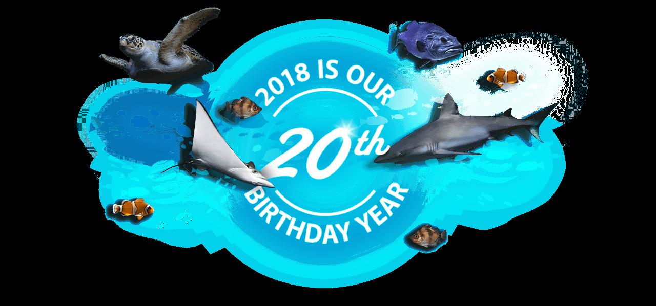 Home national aquarium th. Dolphin clipart marine biology