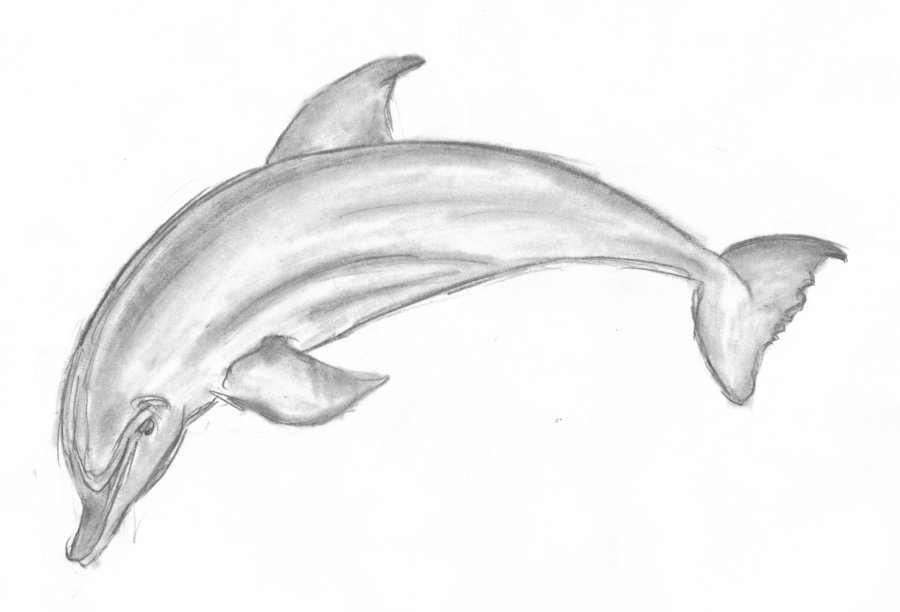 Dolphin clipart pencil. Free drawings download clip