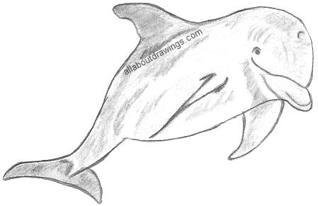 Free drawings download clip. Dolphin clipart pencil