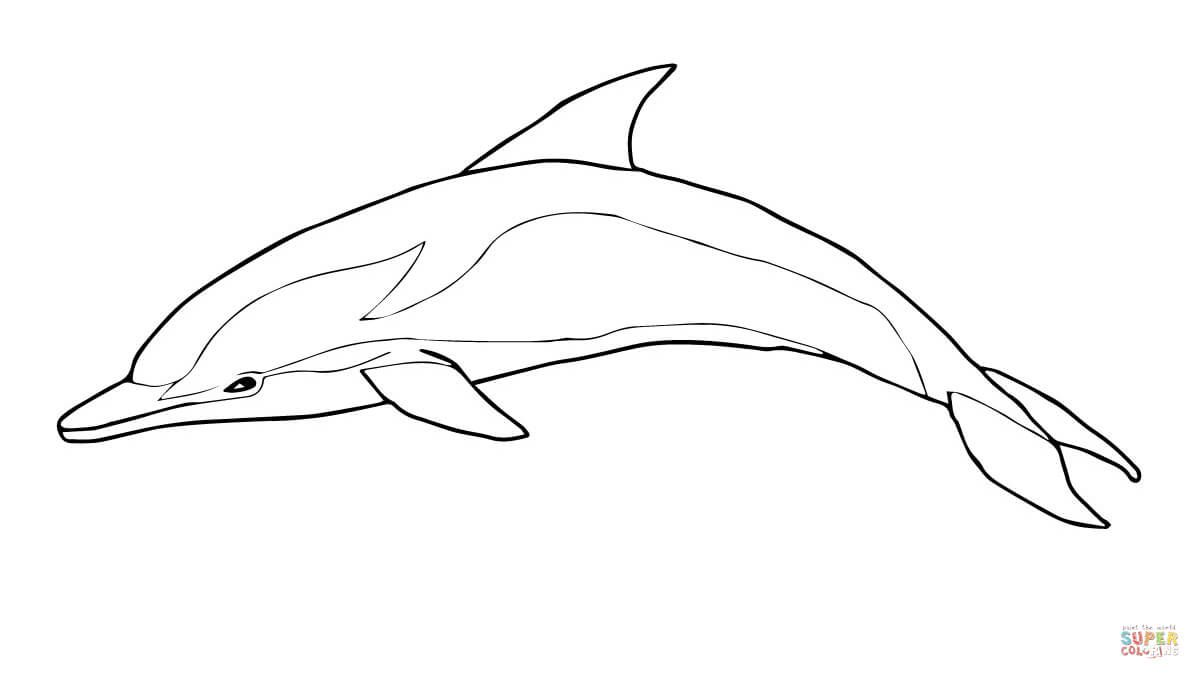 Striped coloring page from. Dolphin clipart printable