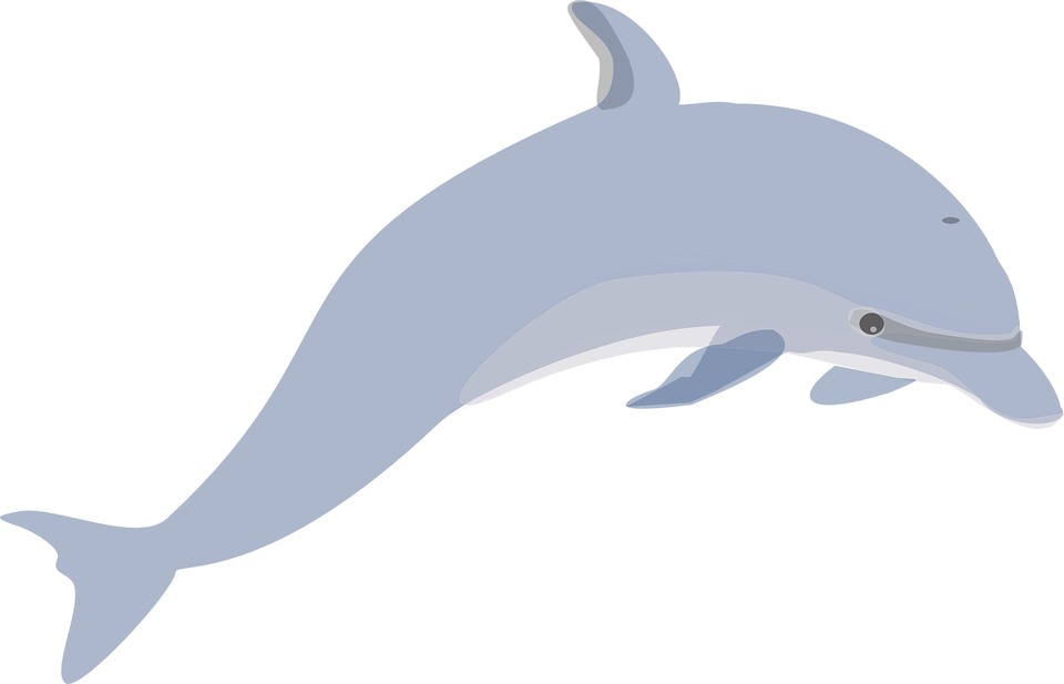 Dolphin clipart realistic. Swimming cliparts shop of