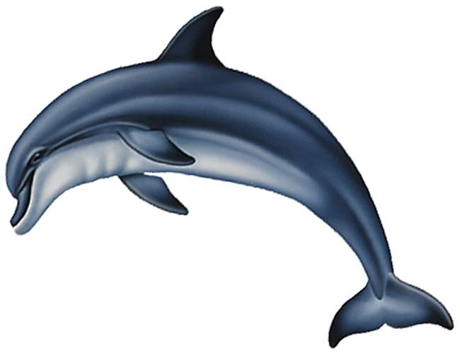 Dolphin clipart side view. Wallpaper bottlenose panda free