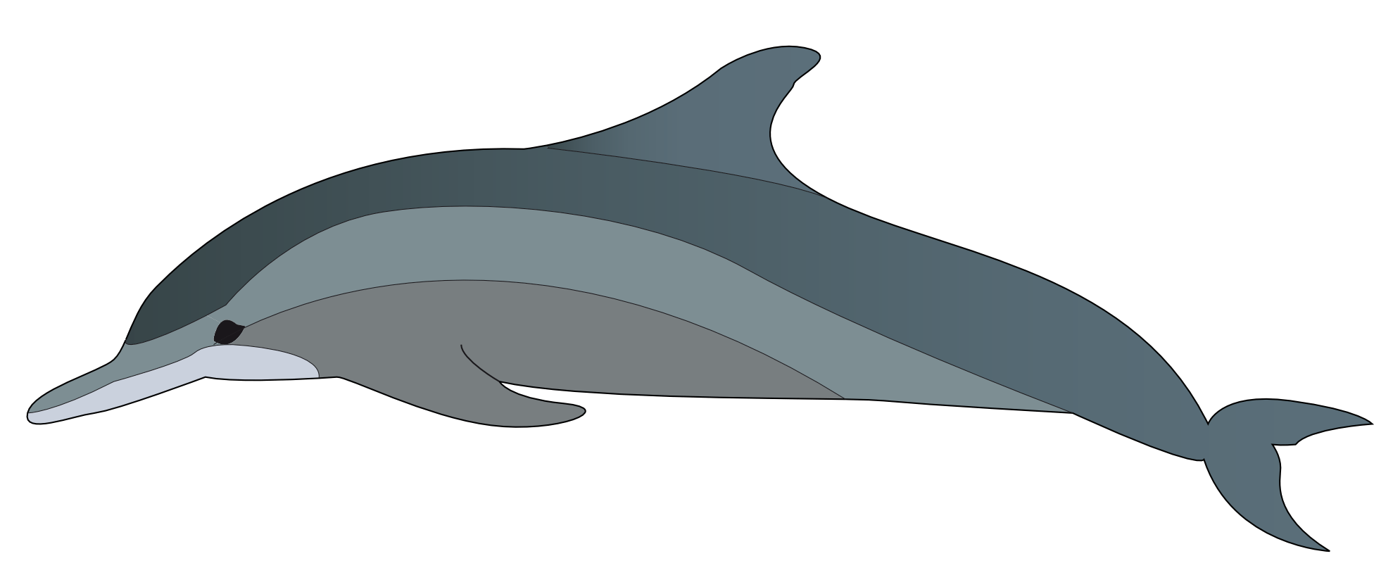 Real cliparts zone clip. Dolphin clipart vector