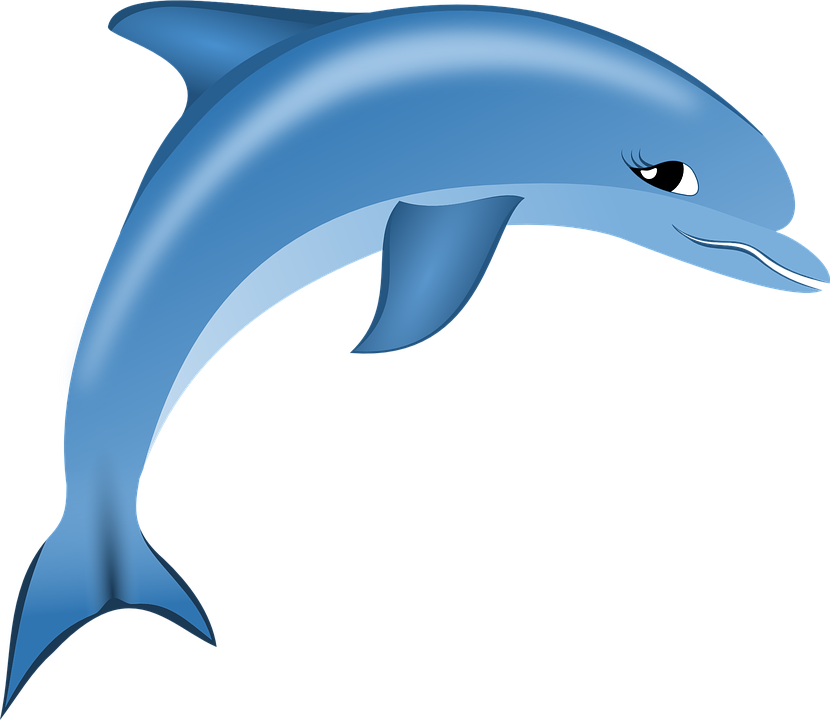 Pictures of cartoon shop. Dolphins clipart bottlenose dolphin