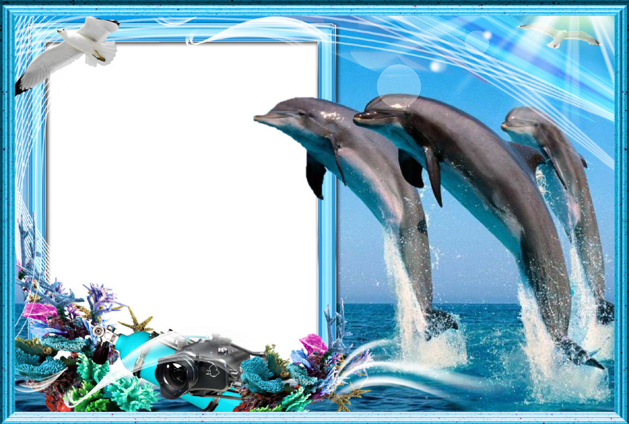 Dolphins clipart frame. Ber hmt dolphin picture