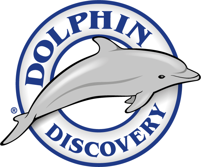 Win and swim with. Dolphins clipart gray dolphin