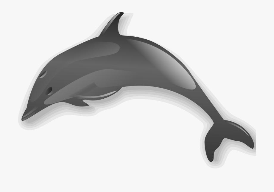 Gray animal no . Dolphins clipart grey dolphin