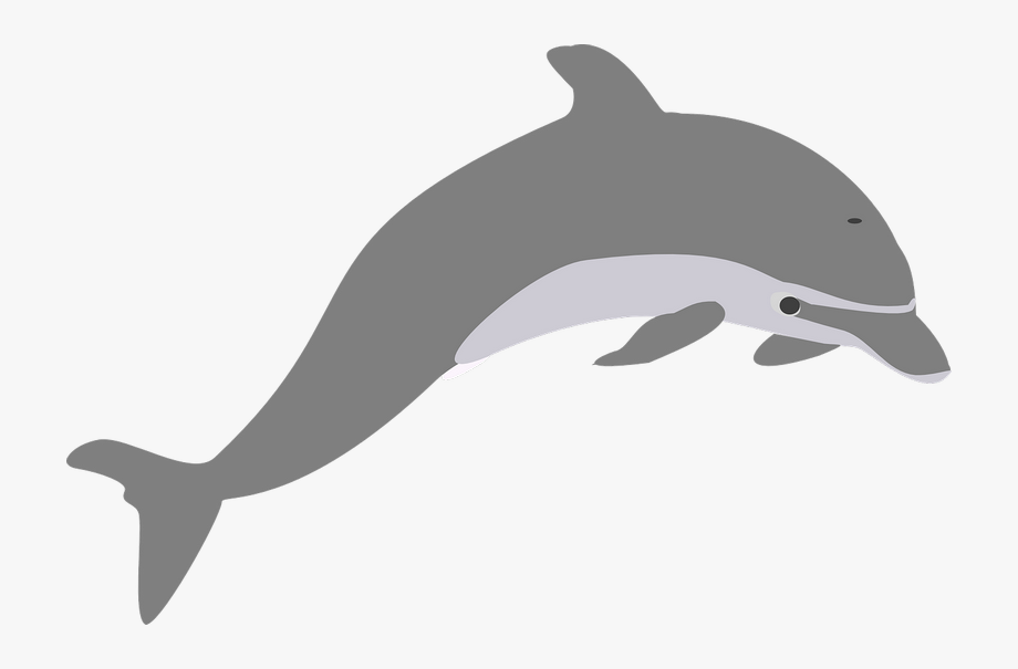 Jump elegant transparent png. Dolphins clipart grey dolphin