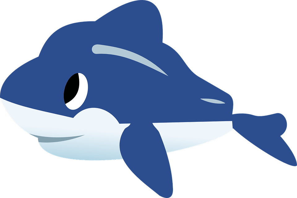 Collection of holiday dolphin. Dolphins clipart realistic