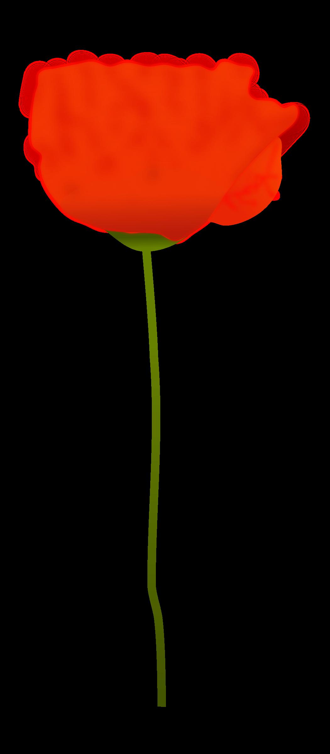 Poppy Clipart poppy plant