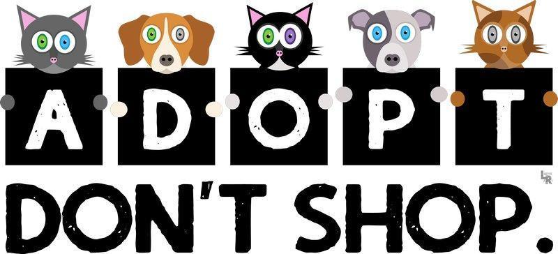 Donation clipart shelter dog. Paisley new french bulldog
