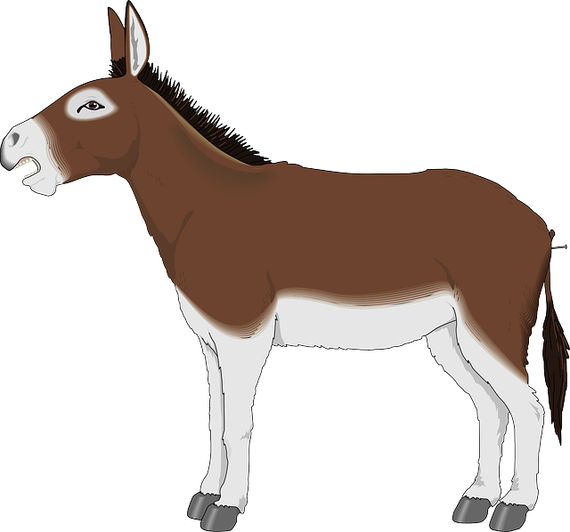 Donkey png . Mule clipart domesticated