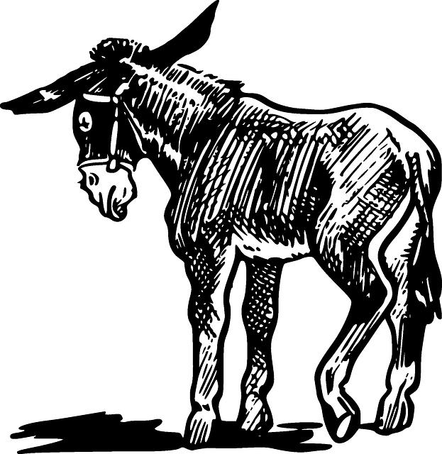 pinata clipart burro