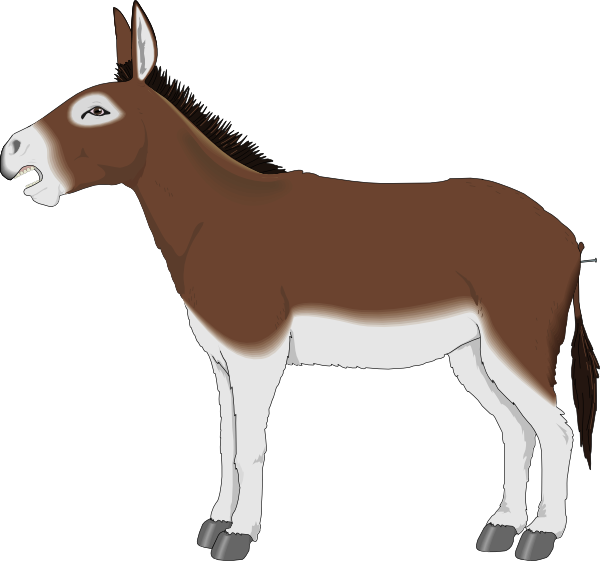 Politics clipart donkey. Brown and white side