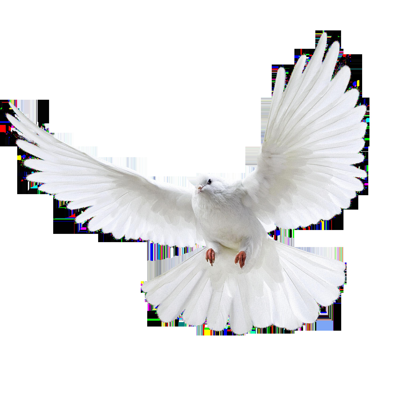 Doves clipart church. White dove three isolated