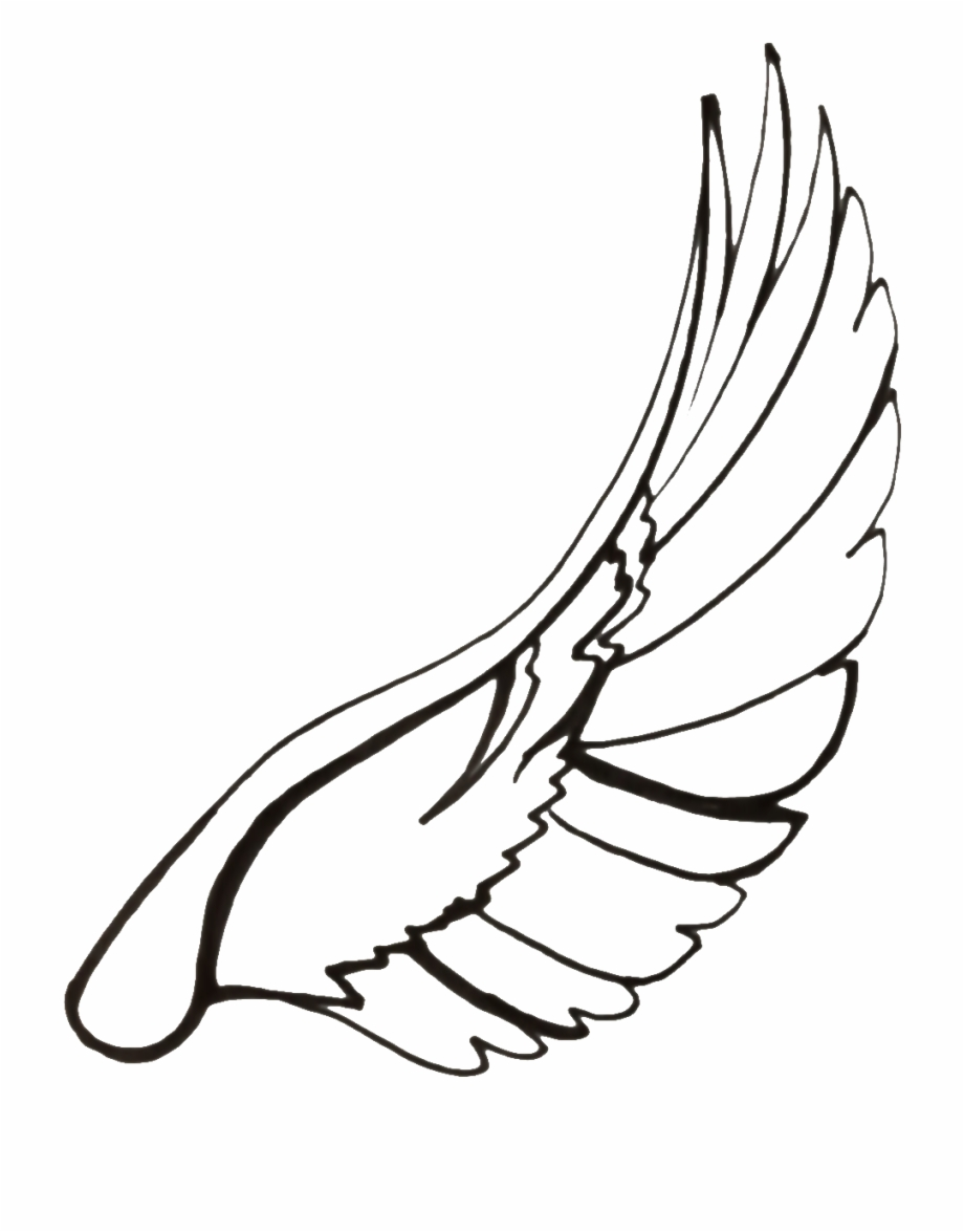 Drawing dove transparent png. Doves clipart feather