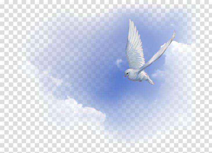 White dove illustration holy. Doves clipart spiritual