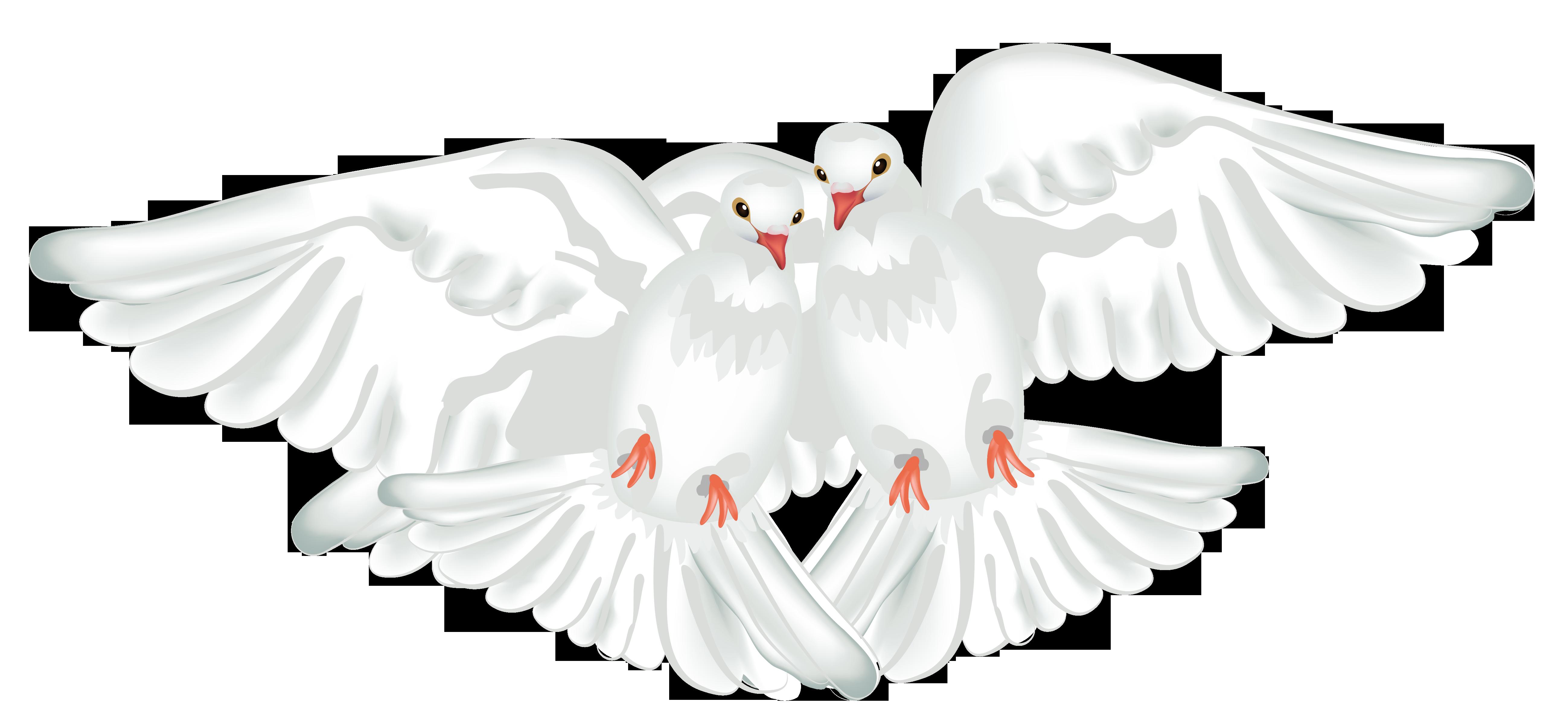 Doves clipart feather. Columbidae ruddy ground dove