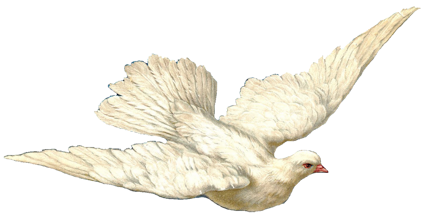 Doves clipart hope. Dove transparent png pictures