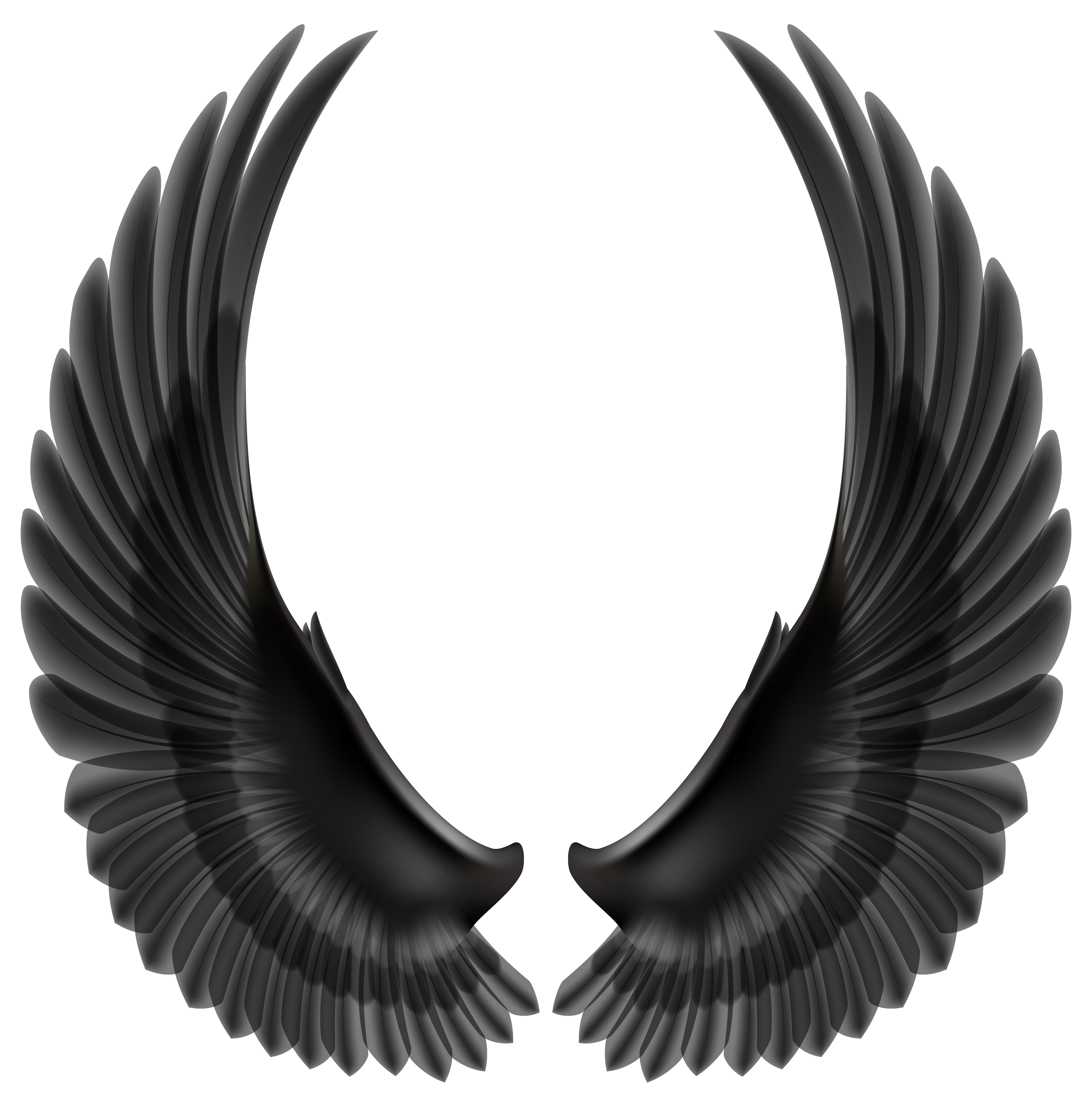 Wing clipart feather wing. Peace pencil and in