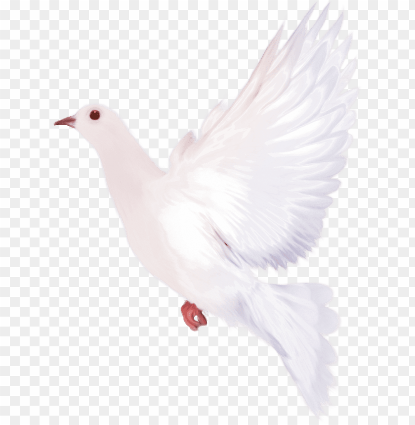 Png image with . Dove clipart watercolor