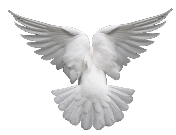 Image conlang fandom powered. Dove png images