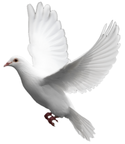 White six isolated stock. Dove png images
