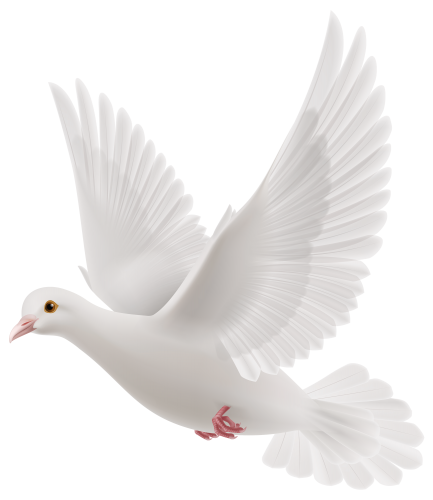 Dove png images. White clipart birds pinterest