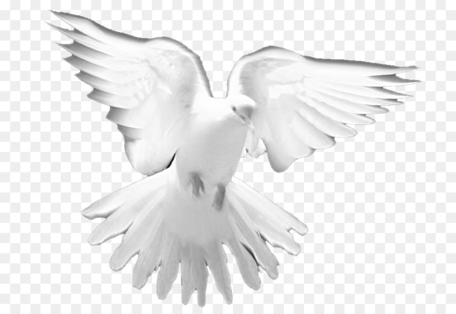Doves clipart church. Cartoon white bird wing