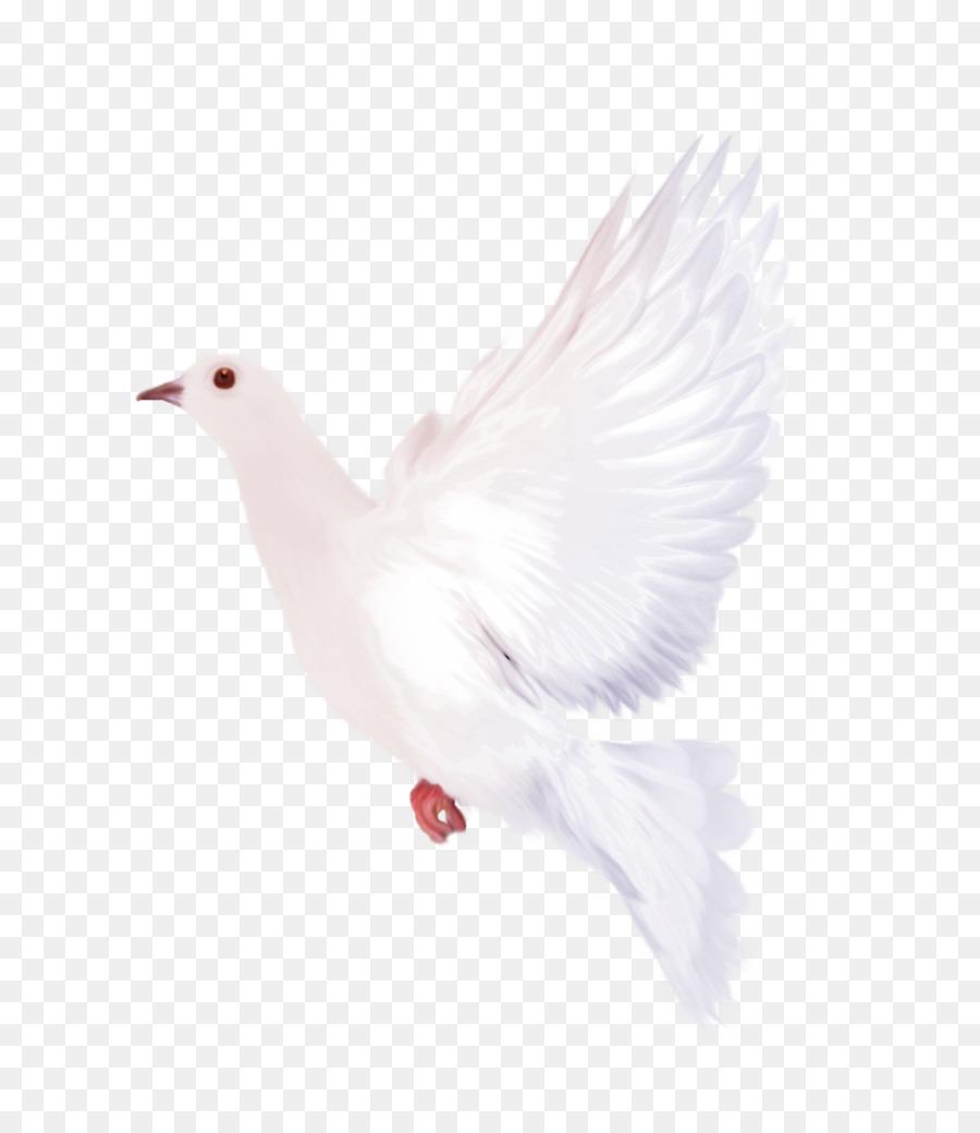 Doves clipart feather. Dove bird chicken transparent