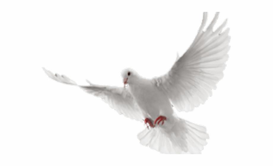 White dove paloma blanca. Doves clipart in flight