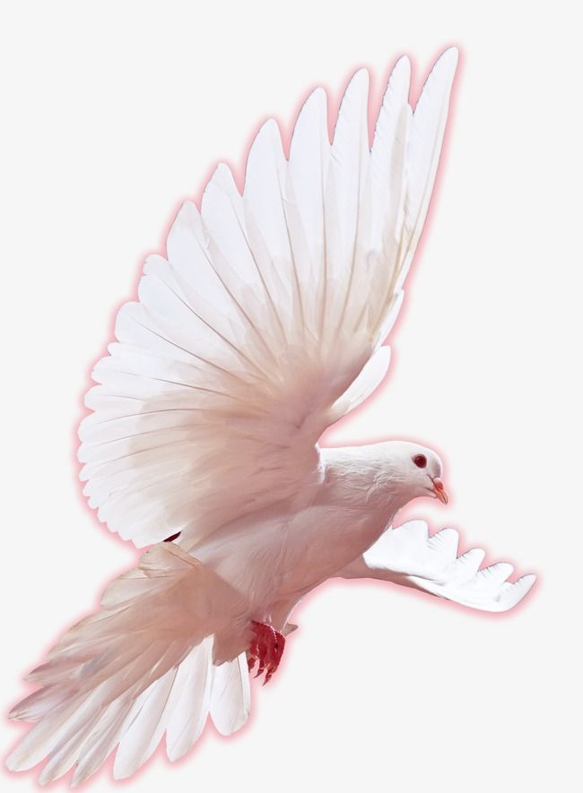 Doves clipart pink. Image result for dove