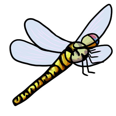 Free download panda images. Dragonfly clipart