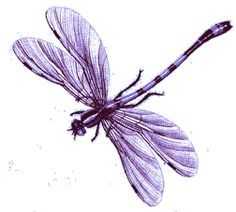 Dragonfly clipart beautiful dragonfly. Pink google search dragonflys